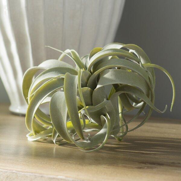 Artificial Tillandsia Pick Foliage Plant by Mistana
