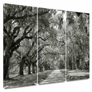 'Live Oak Avenue' 3 Piece Photographic Print on Wrapped Canvas Set by Alcott Hill