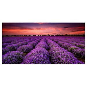 Red Sunset Over Lavender Field Photographic Print on Wrapped Canvas by Design Art