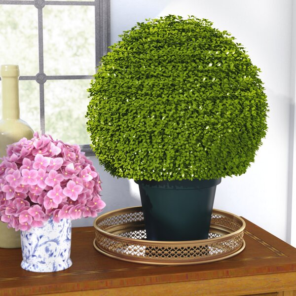 Round Topiary in Pot by Three Posts