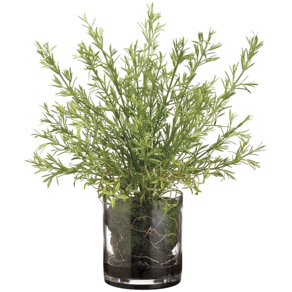Rosemary and Organic Soft Soil Centerpiece in Glass Vase by Williston Forge