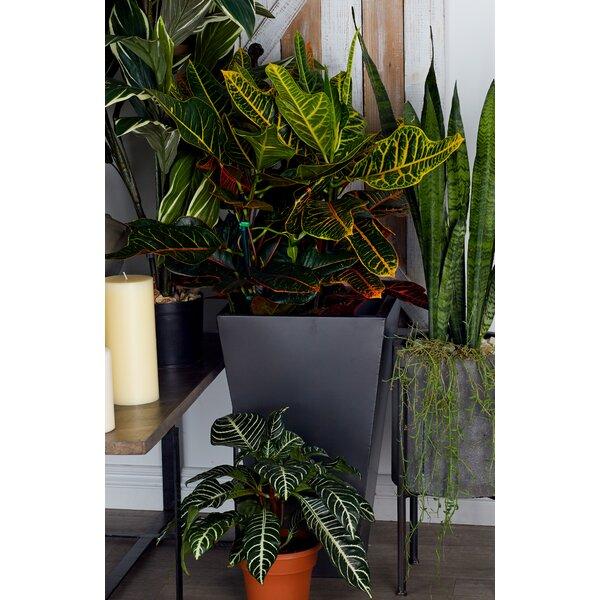 3-Piece Metal Pot Planter Set by Cole & Grey