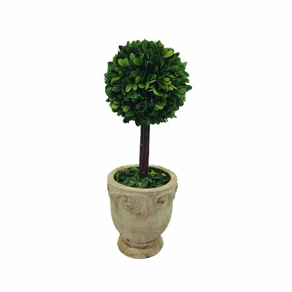 Preserved Boxwood Single Ball Topiary in Pot by Flora Decor