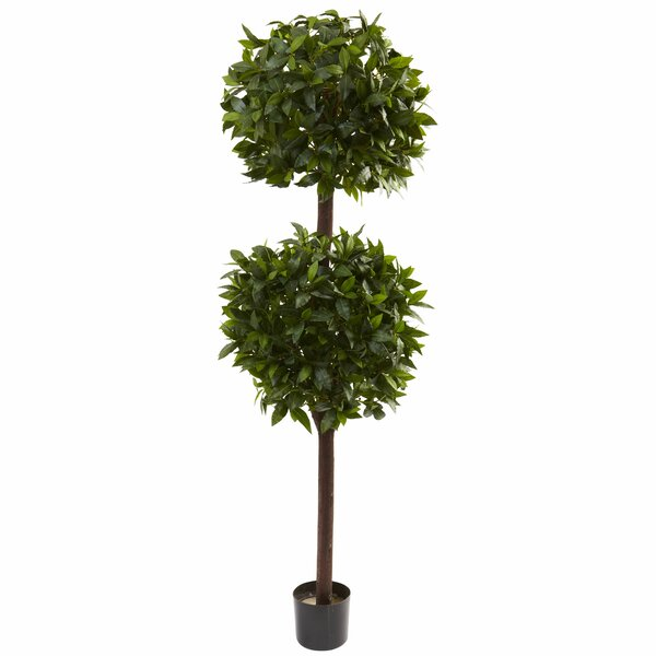 Sweet Bay Double Ball Topiary in Pot by Darby Home Co