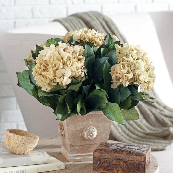 Preserved Ivory Hydrangea Arrangement by Birch Lane™