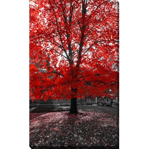 'Red Tree' Photographic Print on Wrapped Canvas by Picture Perfect International