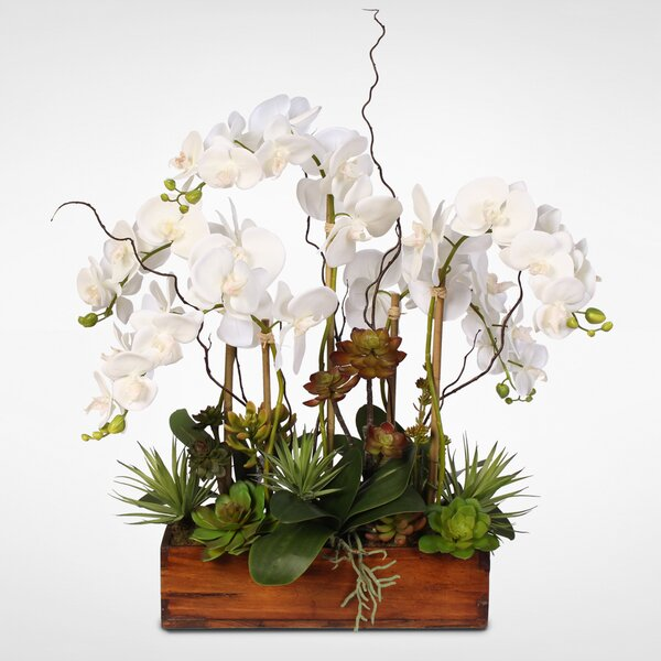Cottage Phalaenopsis Silk Orchids with Succulents Floral Arrangement by Latitude Run