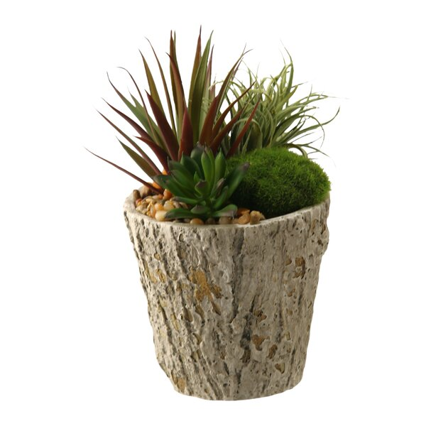 Easter Grass and Succulents Desk Top Plant in Planter by D & W Silks