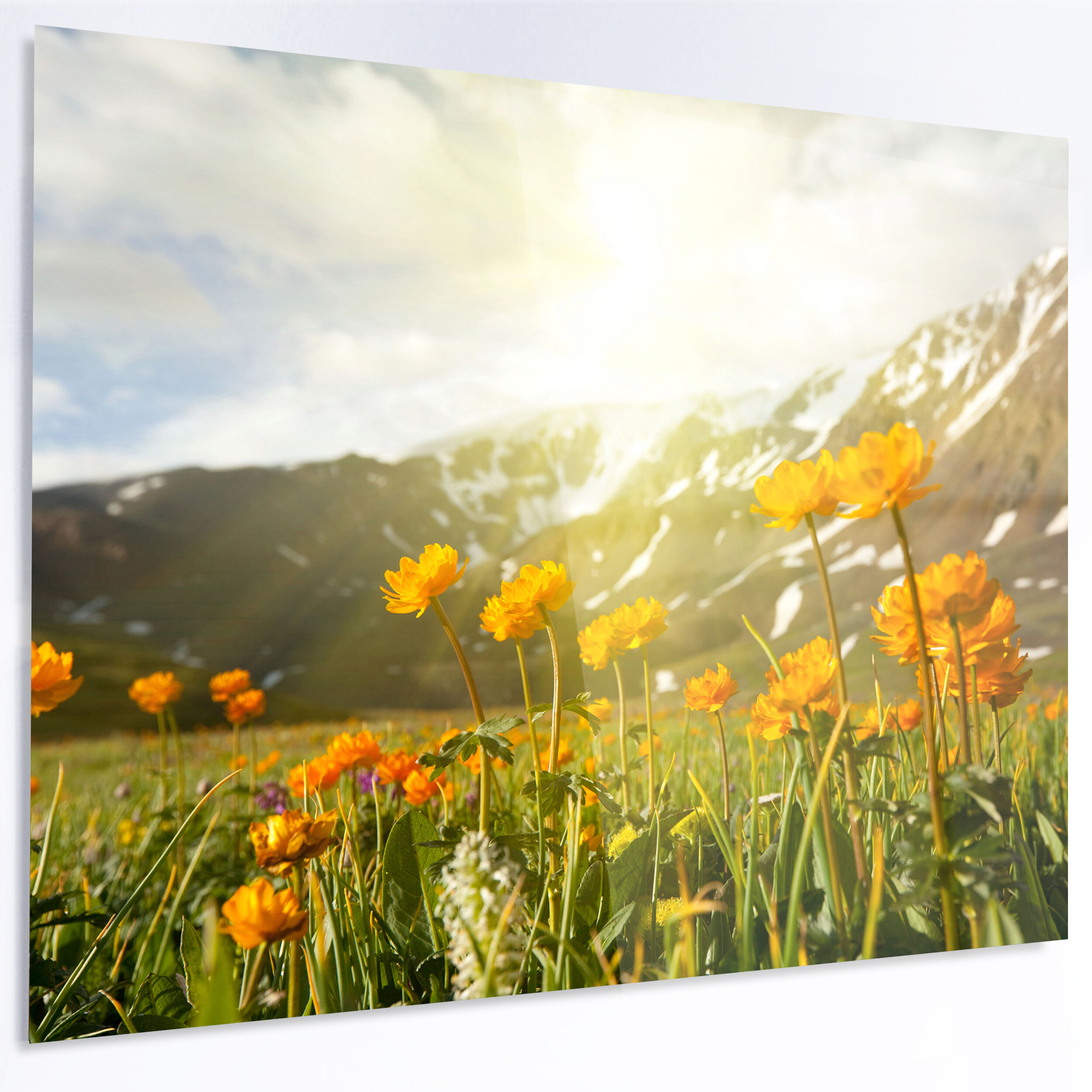 Designart Mountain Pasture With Yellow Flowers Photographic Print