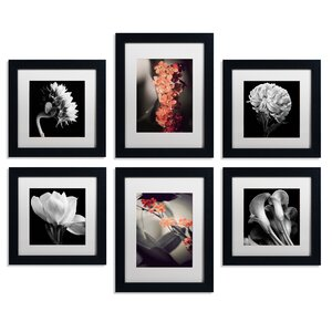 Floral Framed 6 Piece Photo Graphic Print Set on Paper by Trademark Fine Art