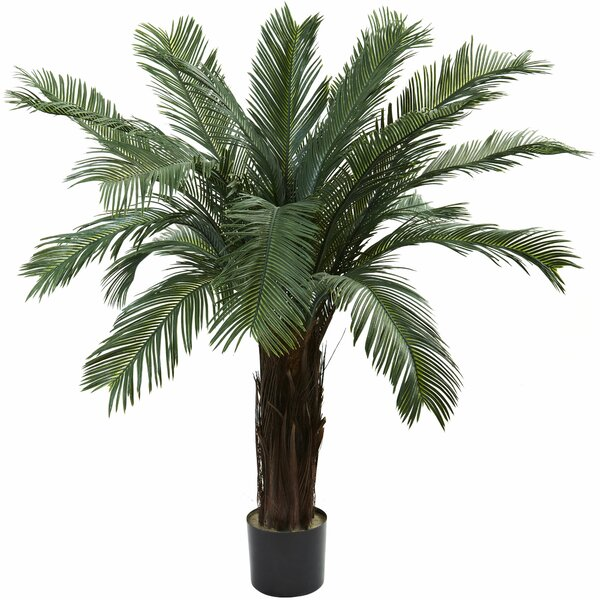 Cycas Palm Tree in Pot by Beachcrest Home