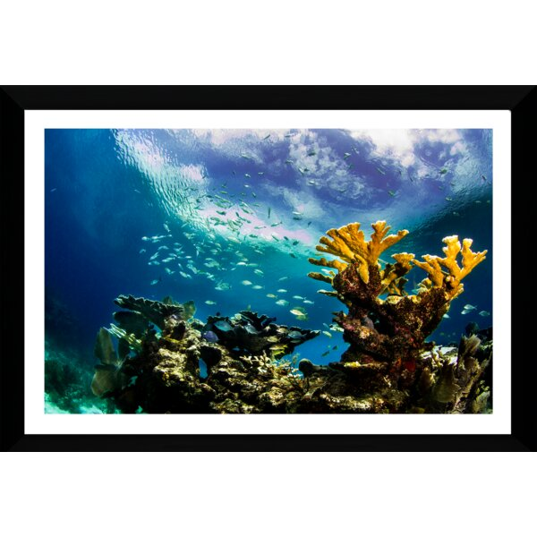 Keys Reef by Craig Dietrich Framed Photographic Print by Picture Perfect International
