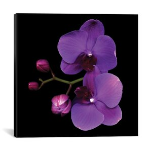 The Color Purple Photographic Print on Wrapped Canvas by House of Hampton
