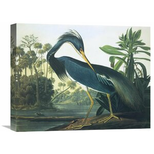 'Louisiana Heron' by John James Audubon Painting Print on Wrapped Canvas by Global Gallery
