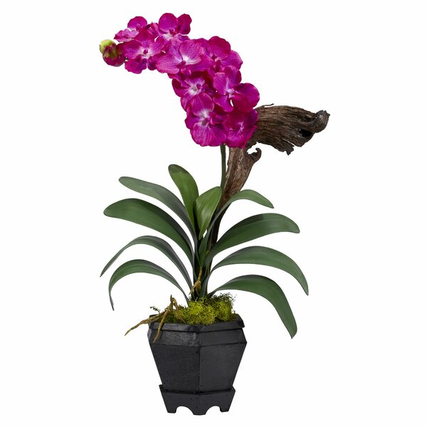 Vanda with Black Hexagon Vase Silk Flower by Nearly Natural