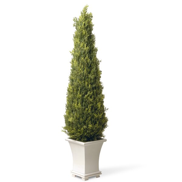 Upright Juniper Square Tapered Topiary in Pot by Darby Home Co