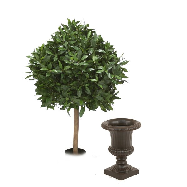 Sweet Bay Single Ball Topiary in Urn by Distinctive Designs