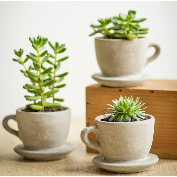 Abordale Tea & Coffee Cup Concrete Pot Planter (Set of 9) by Gracie Oaks