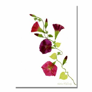 'Morning Glories' by Kathie McCurdy Framed Graphic Art on Wrapped Canvas by Trademark Fine Art