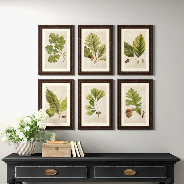 Deciduous 6 Piece Picture Frame Print Set On Paper Reviews Birch Lane