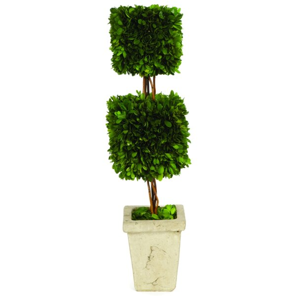 Boxwood Double Square Topiary in Planter by One Allium Way