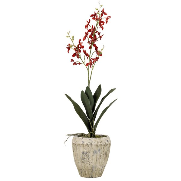 Baby Dendrobium Orchids Floral Arrangement in Planter by Bay Isle Home