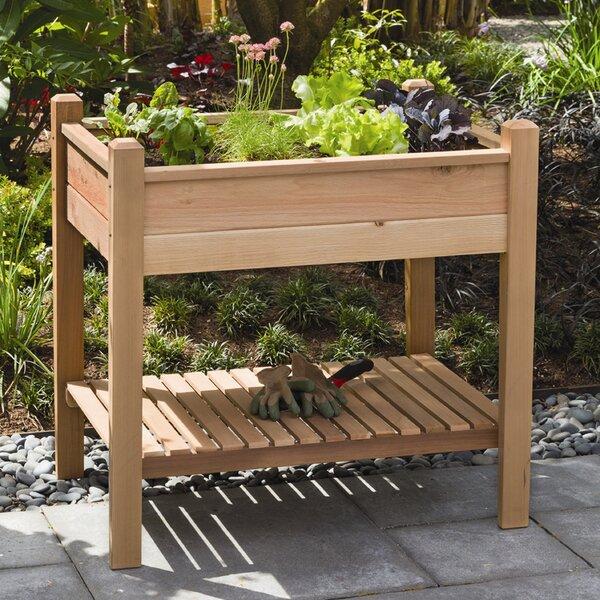Phat Tommy 3 ft x 2 ft Cedar Raised Garden by Buyers Choice