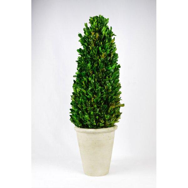 Floor Boxwood Tower Topiary in Pot by Fleur De Lis Living