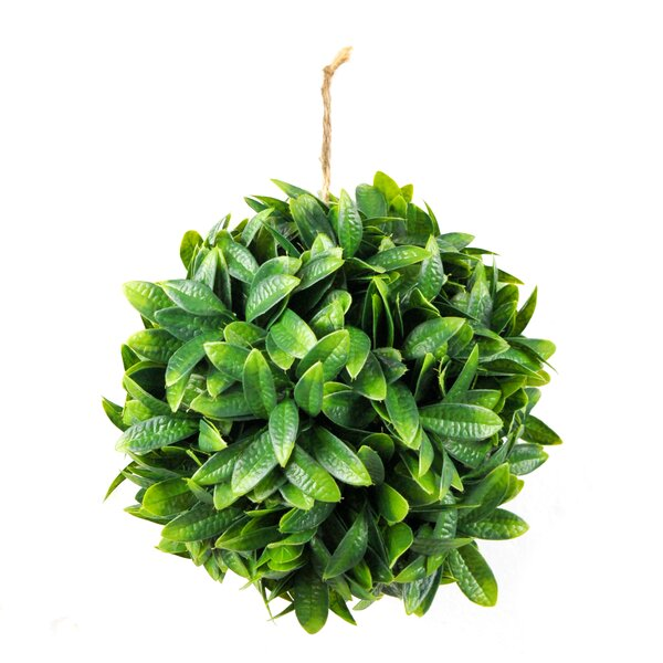 Round Boxwood Topiary by Ophelia & Co.