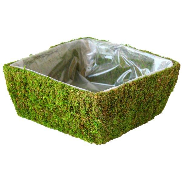 Real Moss Pot Planter (Set of 12) by SuperMoss™