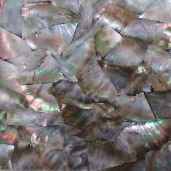 2 x 7.5 Authentic SeaShell Tile Decorative Mosaic in Black Mother of Pearl (Set of 12) by Matrix-Z