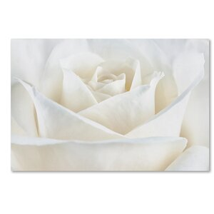 Pure White Rose by Cora Niele Photographic Print on Wrapped Canvas by Trademark Fine Art