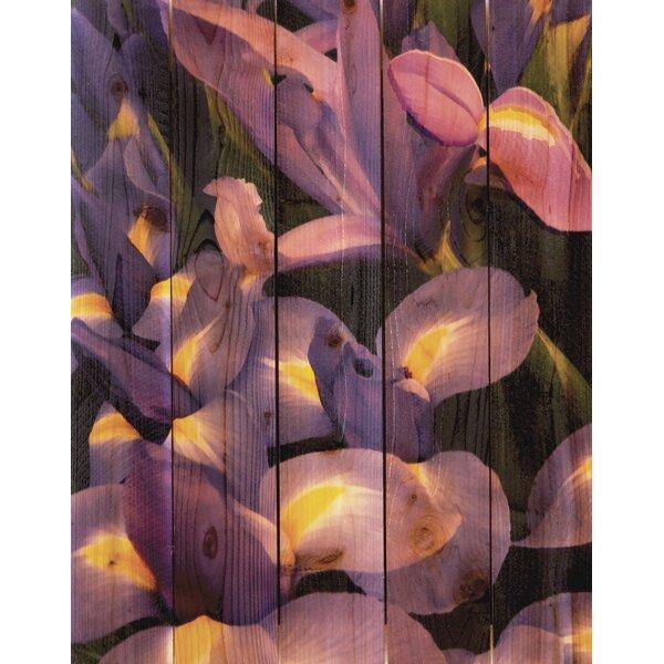 French Iris Photographic Print by Gizaun Art