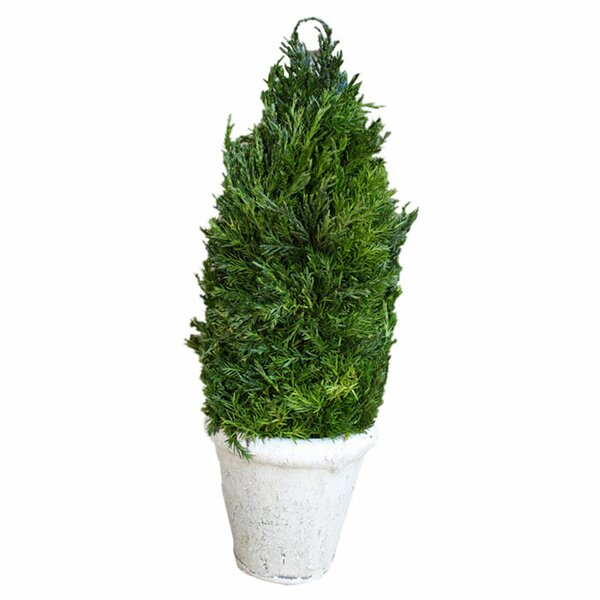 Cypress Cone Topiary in Pot by Charlton Home