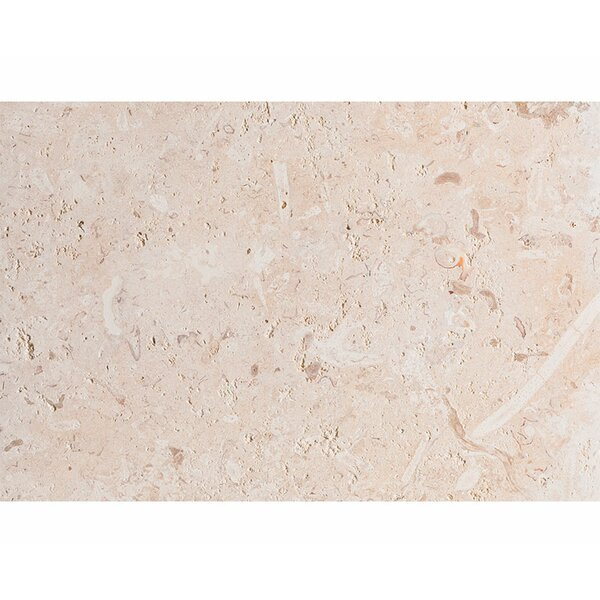 ShellStone Tile 16 x 24 Seashell Field Tile in Beige by Parvatile