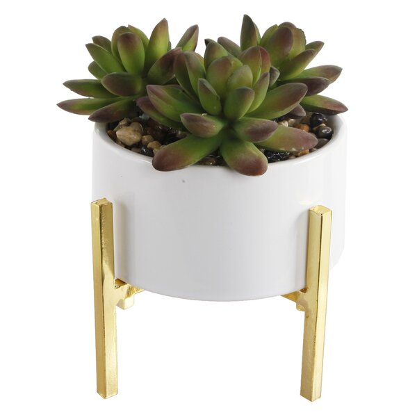 Mix Stand Desktop Succulent Plant in Ceramic Pot by Ebern Designs