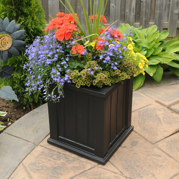 Cape Cod Self-Watering Plastic Planter Box by Mayne Inc.