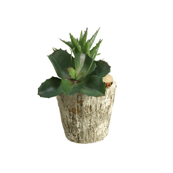 Wild Succulent/Aloe Plant in Planter by Union Rustic