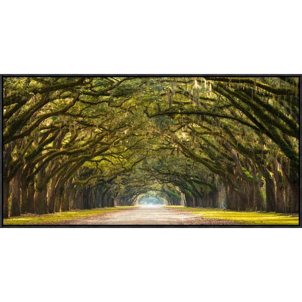 Path Lined with Oak Trees Framed Photographic Print on Canvas by Global Gallery