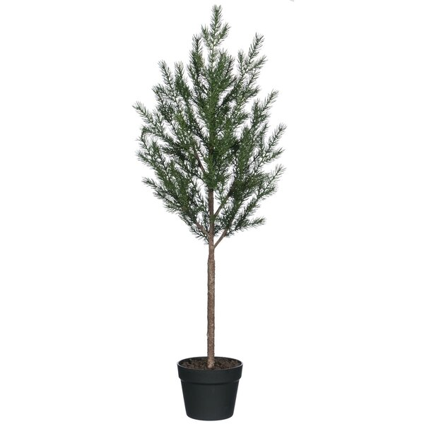 Potted Spruce Pine Tree by The Holiday Aisle