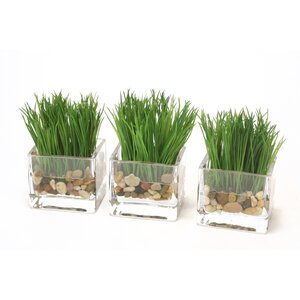 Waterlook Kelly Green Grass in Rectangle Vase (Set of 3)