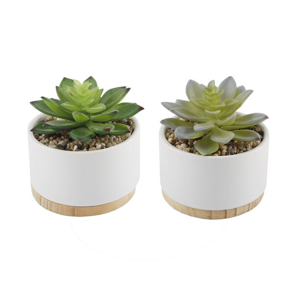 Ceramic Desktop Succulent Plant with Wood Base (Set of 2) by George Oliver