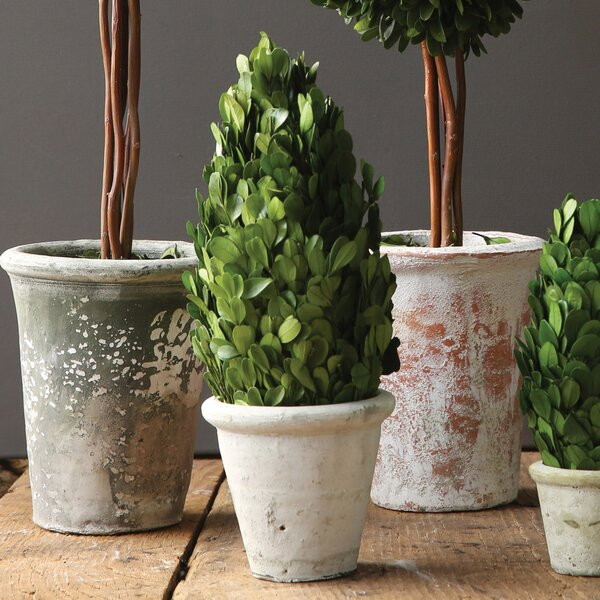Boxwood Tapered Topiary in Pot by Laurel Foundry Modern Farmhouse
