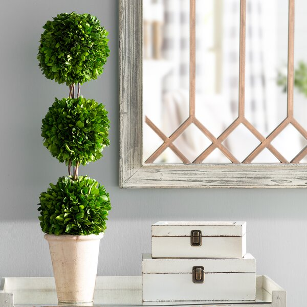 Triple Ball Topiary in Planter by Ophelia & Co.