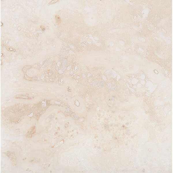 Classic 24 x 24 Travertine Field Tile in Honed Ivory by Parvatile