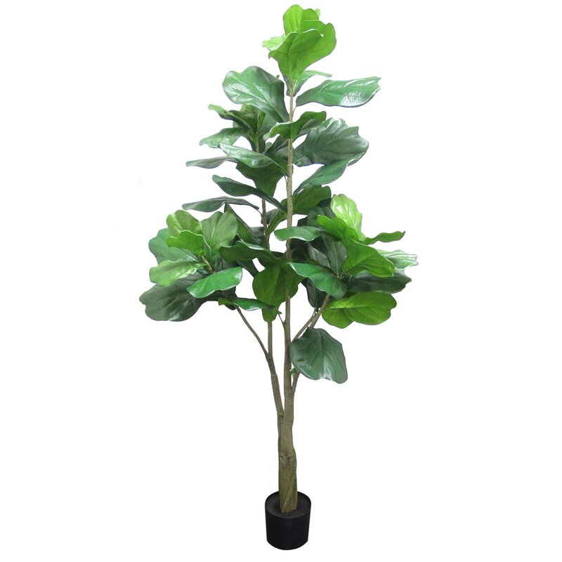 Fiddle Leaf Fig Tree In Planter by Winston Porter