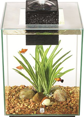 Ainsley 5 Gallon Aquarium Set by Archie & Oscar