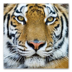 Tiger Color Photographic Print by Benjamin Parker Galleries