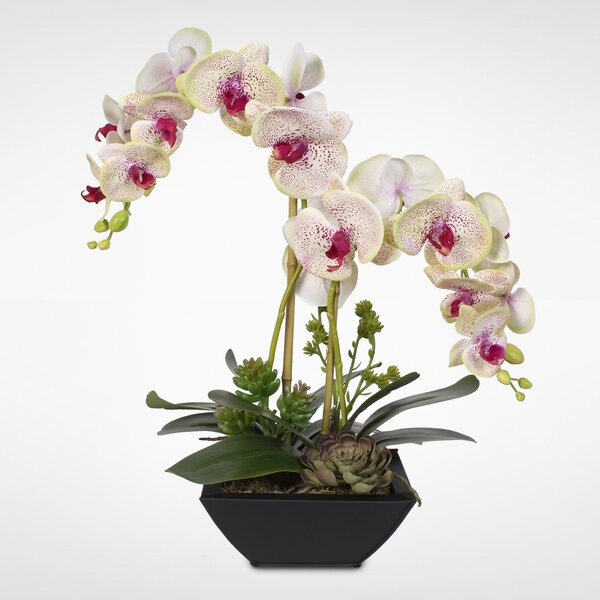 Handmade Phalaenopsis Silk Orchids with Succulents Floral Arrangement in Pot by Latitude Run