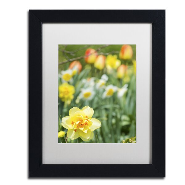 Double Headed Daffodil Framed Photographic Print by Alcott Hill